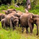 We no longer ride elephants