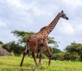 Amboseli National Park - Lumle holidays