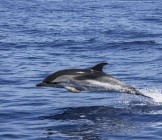 Dolphin South Africa - Lumle holidays