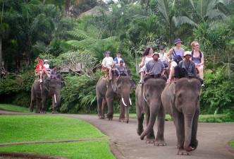 Bali Escape
