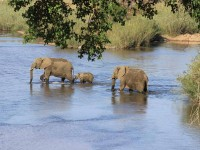 Cape Town Kruger and Garden Route