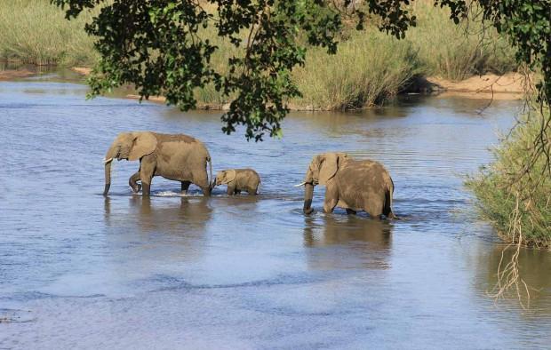 Elephant crossing river - Lumle holidays