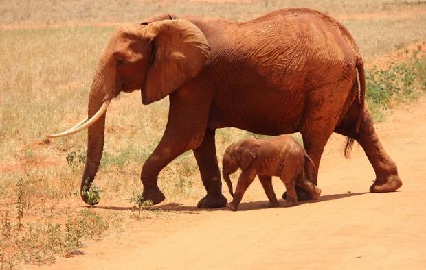 Elephant spotted during safari - Lumle holidays