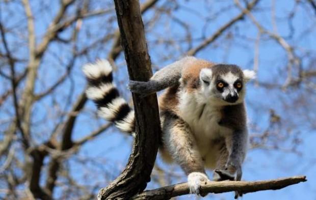Explore Madagascar1