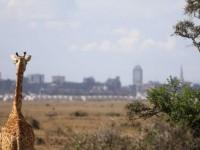 East African Explorer
