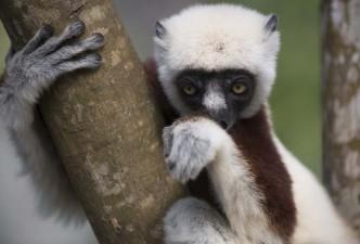 Explore Madagascar
