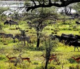 Tanzania - Lumle holidays