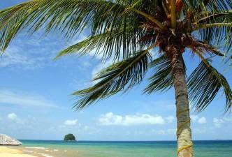 Borneo Escapade