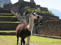 Peru with Flights