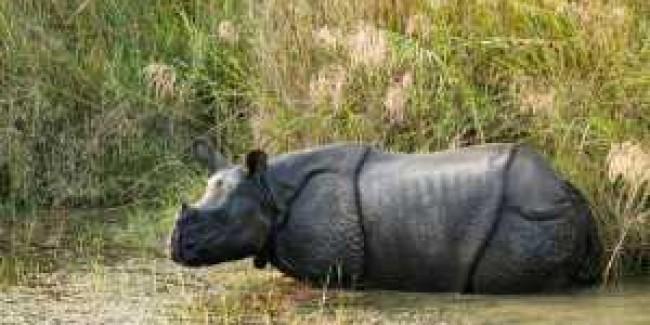 Wildlife & Jungle Safaris
